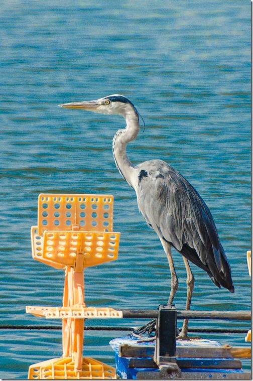 BirdingMaaganMichael_6592_141016