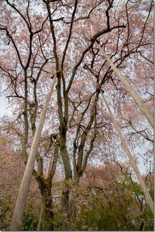 KyotoRyoanji_4569_180409